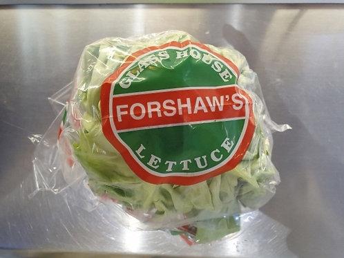 상추 Round lettuce