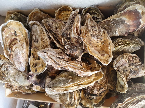 Oyster 굴3pcs