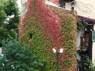 秋といえば。
