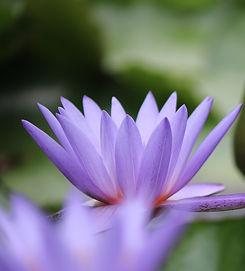 flower-5538547_1920_edited_edited.jpg