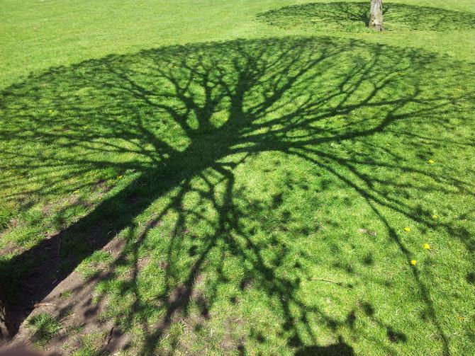 Tree Meditation for Releasing Negativity
