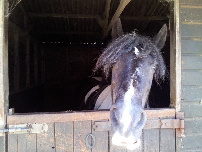 Horses for Healing and Healing for Horses