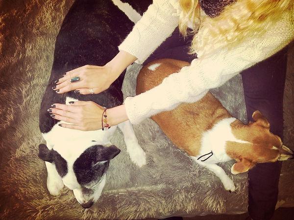 animal reiki sunrise2sunset holistic therapy