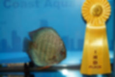 3rd place turq.jpg