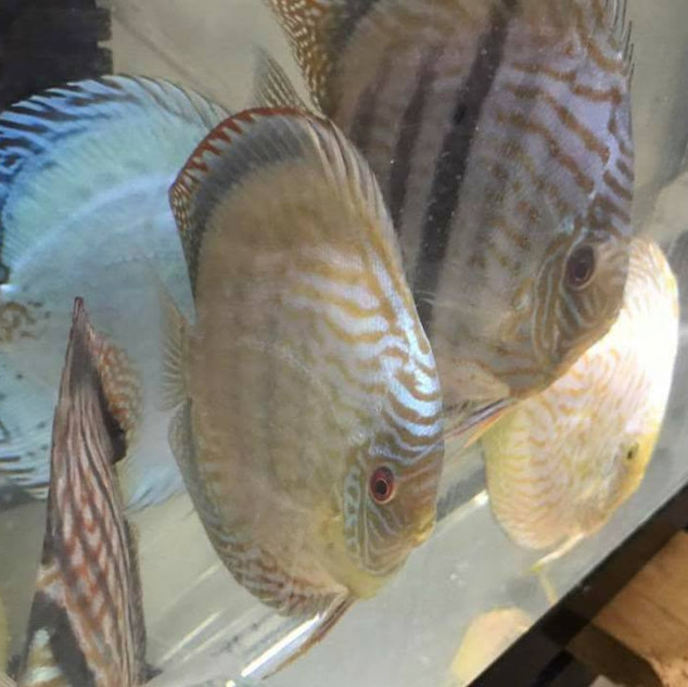 Vince's Discus