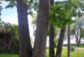 20200611_152546_HDR_edited.jpg