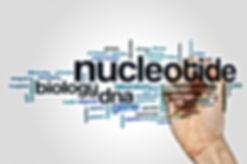 Nucleotide metabolism and cancer