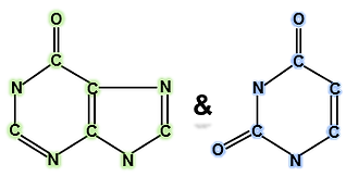 Purine and pyrimidine backbones.tif