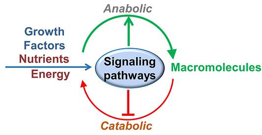 Signaling and cellular metabolism