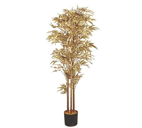 """Διακοσμητικό φυτό""""Bamboo"""""""