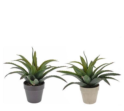 Διακοσμητικό φυτό αλόη