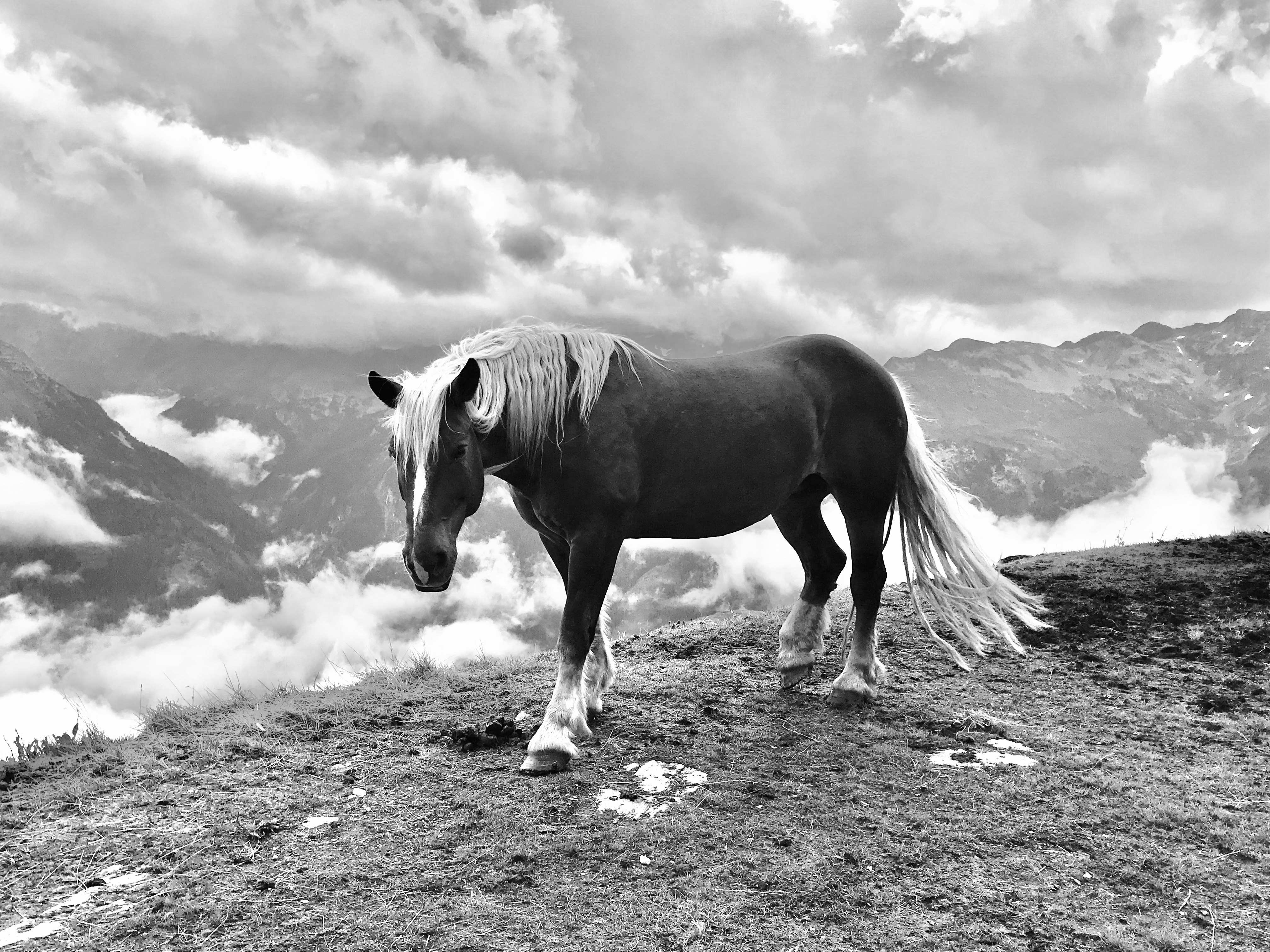horse at the abyss - 2