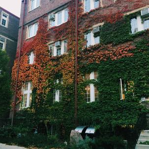 Fall On E. Campus Mall