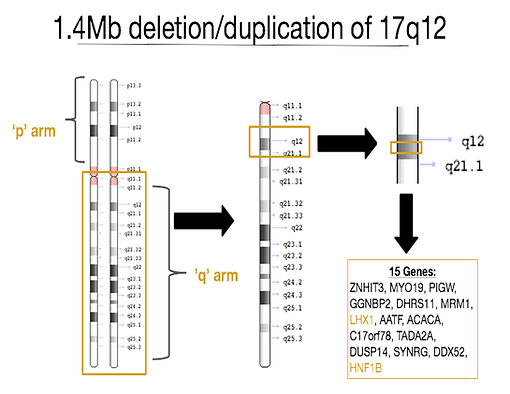 chromosome 17q12