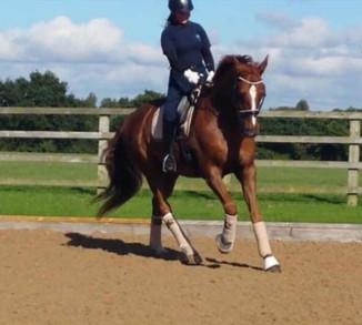 In the Spotlight! Introducing Beth Thomas Equestrian & Dressage.