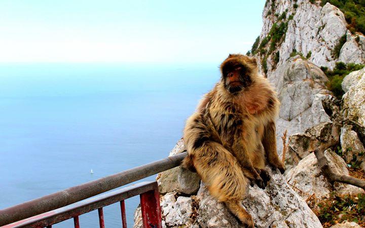 Monos en Gibraltar (2014)