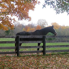 Horse by fence_edited.jpg