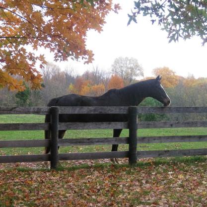Horse by fence_edited.jpg
