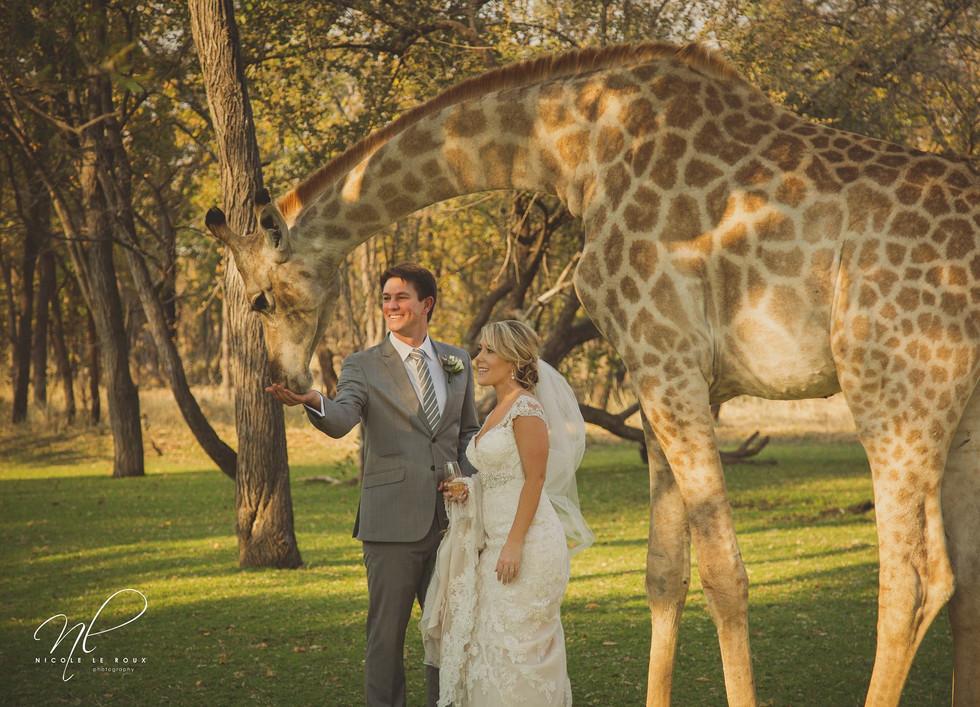 Wildlife Wedding at Pamuzinda