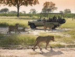 somalisa_098_2.jpg