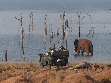 Rhino Safari Camp Shoreline Elephant.JPG