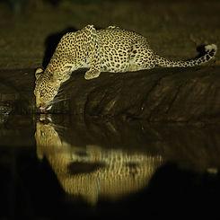 Kavinga Safaris.jpg