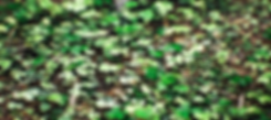 HighresScreenshot00002.png
