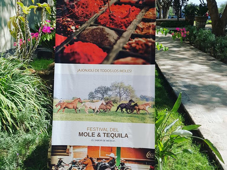 Festival der Mole & Tequila TEUCHITLAN, Jalisco