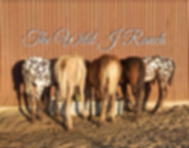 TheWild J Ranch foals