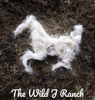 Th Wild J Ranch