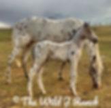 Sha patchobys Menewa's offspring