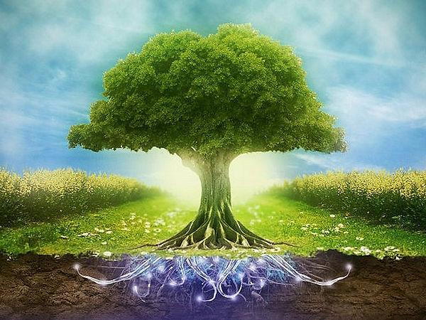 drevo.jpg