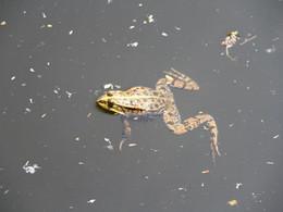 Pour une fois que ma nénette attrape une grenouille