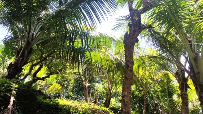 Jungle yoga retreat oys.jpg