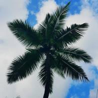 Coconut tree against sky