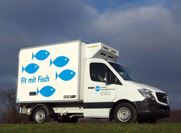 Stadek Fisch