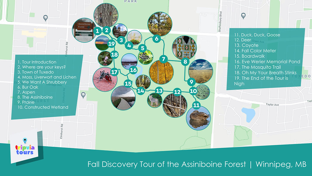 Assiniboine forest city walk winnipeg