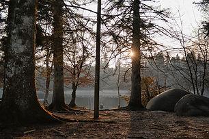 trees-4337606_1920.jpg