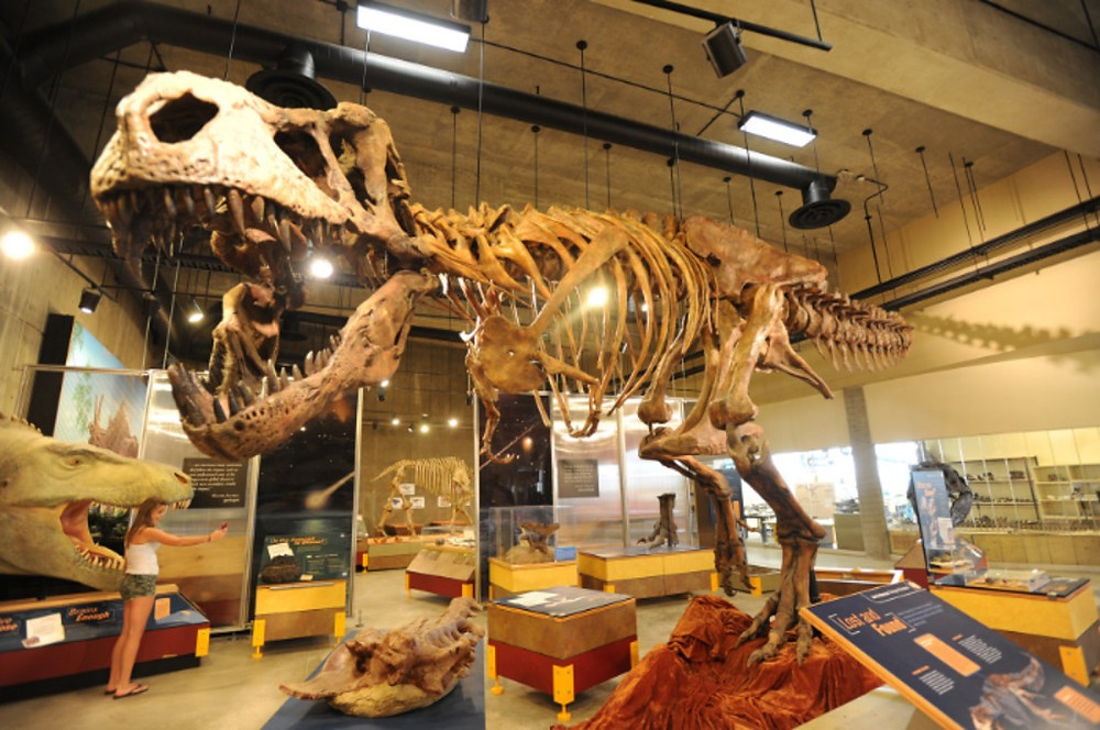 driving tours saskatchewan scotty t-rex discovery centre