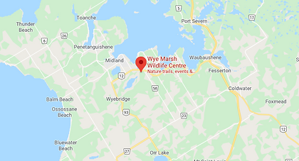wye marsh midlnd
