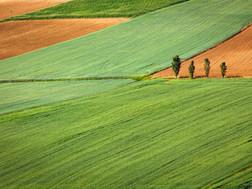 Seeding the Future Food Supply