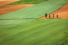 Farming Field