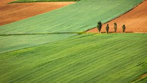 Innovazione vegetale, Assosementi: la decisione spetta all'Europa. L'agricoltura italiana ha bisogno