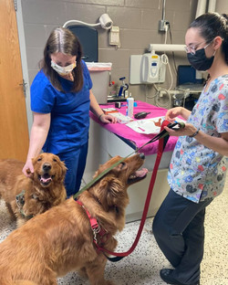 Kyleigh assists Dr Smith with Bo & Gunner's check up!