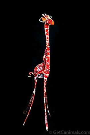 Red & White Giraffe