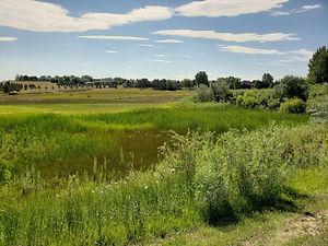 Highlands Meadow Pkway facing east.jpg