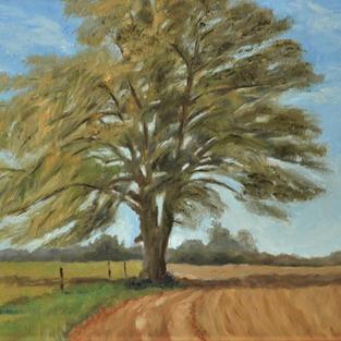 """Lone Tree, 16"""" x 20"""""""
