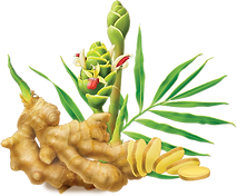 Ginger Root Plant.png