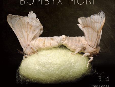 Bombix Mori