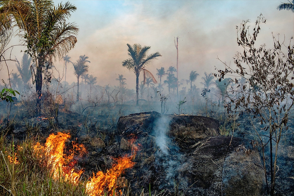 Verwoesting Amazoneregenwoud